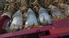 Nowożytny syndykata żniwiarz zamknięty w górę podnosić kukurudzy zbiory wideo