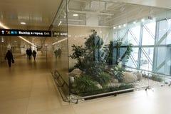 Nowożytny wewnętrzny projekt z salowymi roślinami Simferopol lotnisko 2019 Styczeń 01 fotografia stock