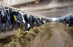 Nowożytna krowy stajenka Zdjęcia Stock