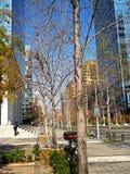 Nowożytni szklani budynki w Santiago, Chile zdjęcia royalty free