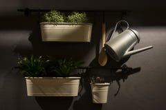 nowoczesna kuchnia wewnętrznego Kwiaty w garnkach na popielatej ścianie Fotografia Royalty Free