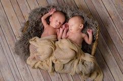 Nowonarodzeni bliźniacy w koszu Zdjęcia Royalty Free