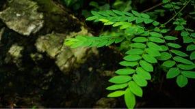 Nowonarodzone zielone rośliny fotografia royalty free