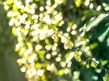 Nowonarodzony bluszcz i światło słoneczne zdjęcie royalty free