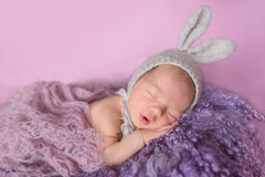 Nowonarodzony dziecko królik Obrazy Royalty Free