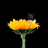 Nowonarodzony na kwiacie Zdjęcie Stock
