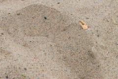 Nowotworów nożyce w piaska odcisku stopy plaża Zdjęcia Royalty Free