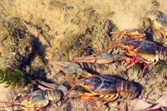 Nowotwory w rzece z przejrzystą wodą obraz stock