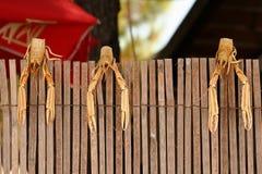 Nowotwory wieszają na ogrodzeniu obrazy royalty free