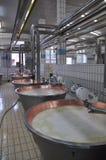 Nowożytna serowa fabryka: Pamigiano Reggiano Obraz Royalty Free