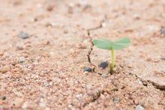 Nowy życie rośliny są kiełkować i rosnąć, rośliny, Obrazy Royalty Free