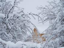 Nowy drewniany dom w lesie może widzieć przez śnieżystych gałąź fotografia stock