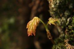 Nowy Drzewny przyrost i mech obrazy royalty free