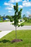 Nowy drzewo Obrazy Stock