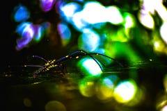 Nowy i rzadki pająk zakłada w indyjski fporest Fotografia Stock