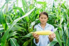 Nowy kukurydzany fedrunek w rękach rolnicy zdjęcia stock
