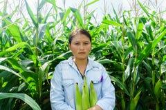 Nowy kukurydzany fedrunek w rękach rolnicy zdjęcie royalty free