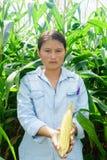 Nowy kukurydzany fedrunek w rękach rolnicy fotografia stock