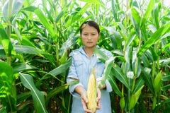 Nowy kukurydzany fedrunek w rękach rolnicy fotografia royalty free