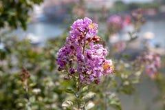 Nowy kwitnienie Kwitnie w wiośnie zdjęcia royalty free