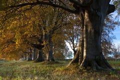 Nowy las Zdjęcia Royalty Free