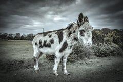 Nowy las, konik i koń, obrazy stock