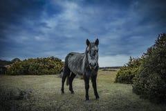 Nowy las, konik i koń, Obrazy Royalty Free