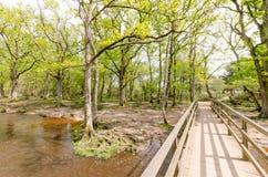 Nowy Lasowy lasu strumień Obrazy Stock
