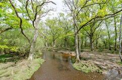 Nowy Lasowy lasu strumień Zdjęcie Royalty Free