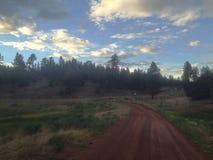 Nowy - Mexico lasu zmierzch Obraz Stock