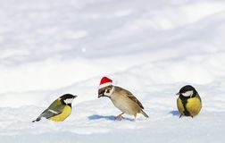 Nowy rok karta z pięknymi śmiesznymi ptakami tits patrzeje sp zdjęcia stock