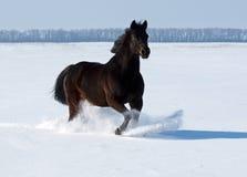 Nowy Rok koń Zdjęcie Stock