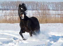 Nowy Rok koń Zdjęcia Royalty Free