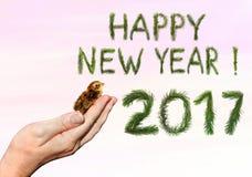 Nowy Rok urodzony Fotografia Royalty Free