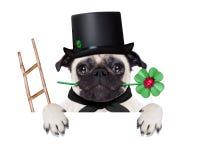 Nowy rok wigilia psa Zdjęcia Stock