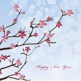 Nowy Rok wiosna kwitnie tło Zdjęcie Stock