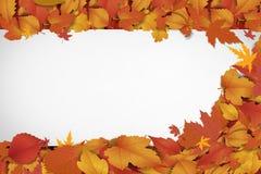 Nowy słodki jesieni tło Obraz Royalty Free