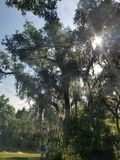 Nowy Smyrna Floryda Live Oak drzewo zdjęcia royalty free