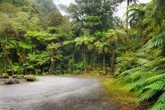 nowy tropikalny las deszczowy Zealand Fotografia Royalty Free