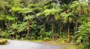 nowy tropikalny las deszczowy Zealand Zdjęcia Royalty Free