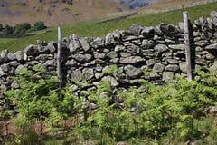 Nowy wzrostowy bracken, sucha kamienna ściana, Jeziorny okręg zdjęcia royalty free