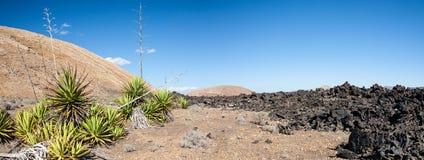 Nowy życie, Lanzarote, wyspy kanaryjska Fotografia Royalty Free