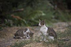 2018 nowych fotografii, śliczny przybłąkany kot Zdjęcia Stock