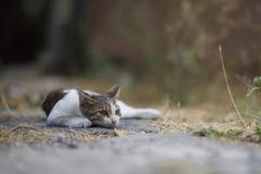 2018 nowych fotografii, śliczny przybłąkany kot Obrazy Stock