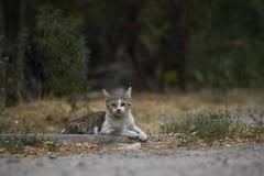 2018 nowych fotografii, śliczny przybłąkany kot Fotografia Royalty Free