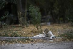 2018 nowych fotografii, śliczny przybłąkany kot Zdjęcie Stock