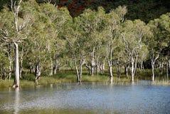 Noyés dos arbres de Les Fotos de Stock Royalty Free