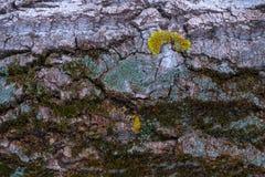 Noyau d'arbre avec de la mousse photo libre de droits