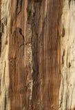 Noyau de log de chêne image libre de droits