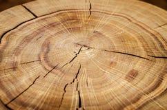 Noyau de rondin contre un plancher en bois Vue d'angle closeup Série de fond Image stock